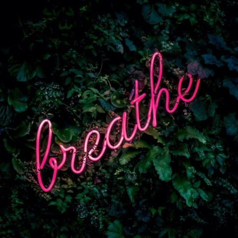 neon sign saying breath on background of leaves